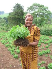 Kenyan Woman with Stevia Plant