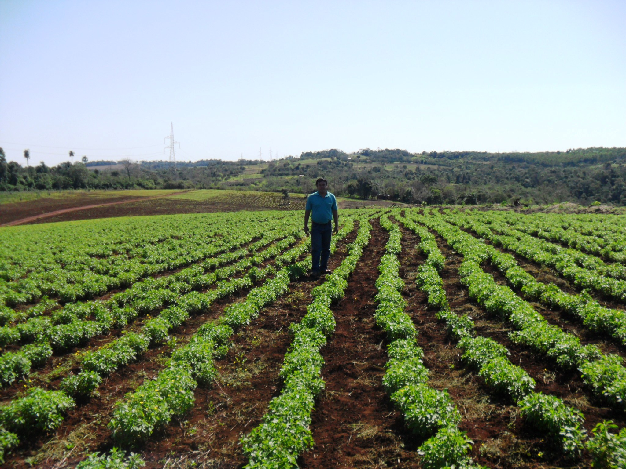 Farming sustainability purecircle stevia institute - Profitable crops small plots ...